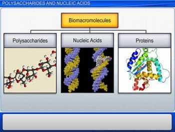 Animated video Lecture for Polysaccharides and Nucleic Acids