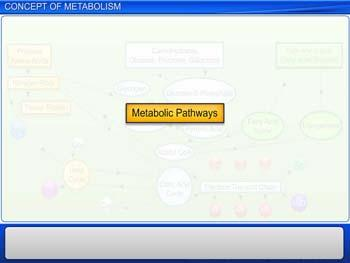 Animated video Lecture for Concept of Metabolism