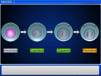 Animated video Lecture for Meiosis - I