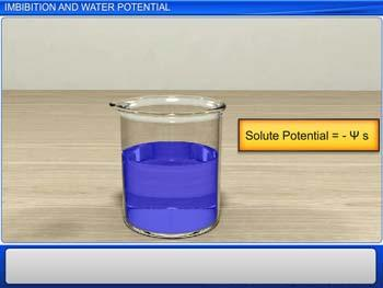 Animated video Lecture for Imbibition and Water Potential