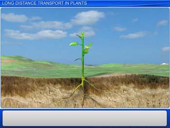 Animated video Lecture for Long Distance Transport in plants