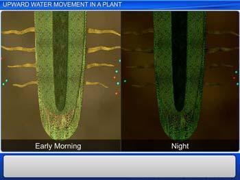 Animated video Lecture for Upward Water Movement in a Plant