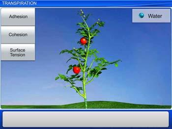 Animated video Lecture for Transpiration