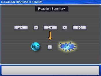 Animated video Lecture for Electron Transport System