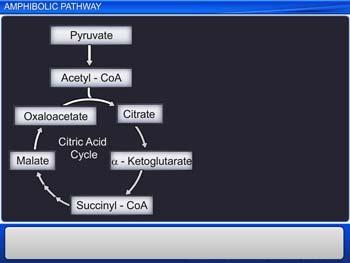 Animated video Lecture for Amphibolic Pathway