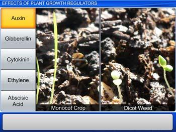 Animated video Lecture for Effects of Plant Growth Regulators