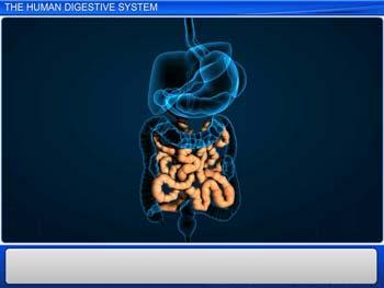 Animated video Lecture for The Human Digestive System