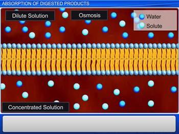 Animated video Lecture for Absorption of Digested Products