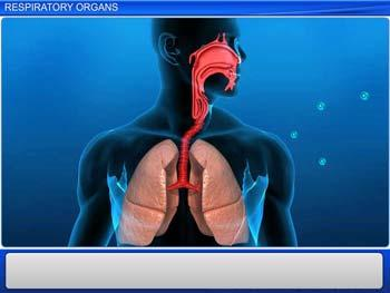 Animated video Lecture for Respiratory Organs