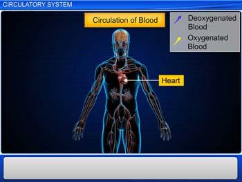 Animated video Lecture for Circulatory System