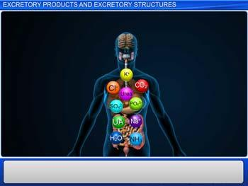Animated video Lecture for Excretory Products and Excretory Structures