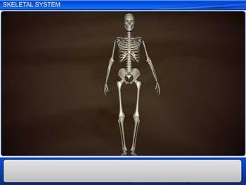 Animated video Lecture for Skeletal System