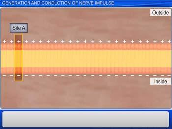 Animated video Lecture for Generation and Conduction of Nerve Impulse