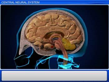 Animated video Lecture for Central Neural System