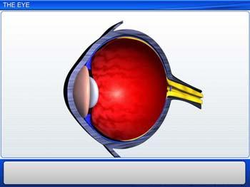Animated video Lecture for The Eye
