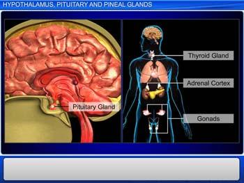 Animated video Lecture for Hypothalamus, Pituitary Gland and Pineal Gland