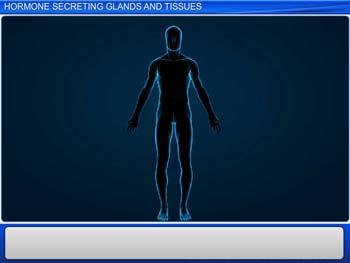 Animated video Lecture for Hormone Secreting Glands and Tissues