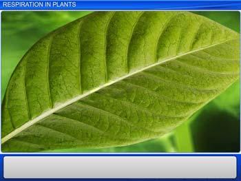 Animated video Lecture for Respiration in Plants